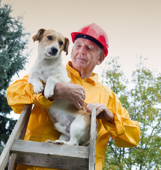 Wildfires and Pet Emergencies