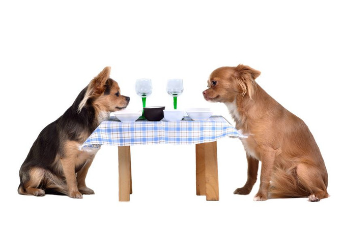 Pet Friendly East Bay Restaurants