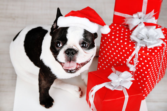 Gifts For Your Pets This Holiday!