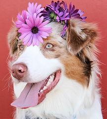 dogs-1790047_1920.jpg