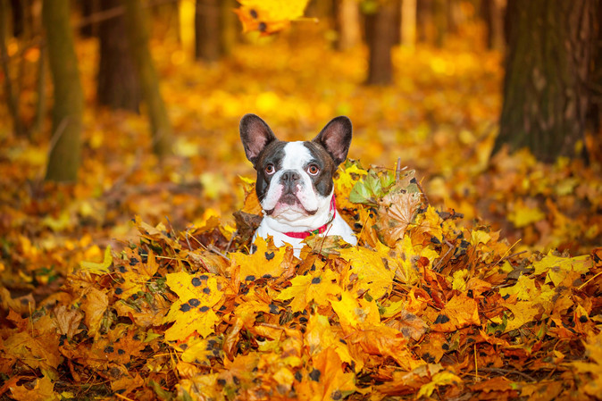 Fall Pet Preparedness - What to Watch Out For