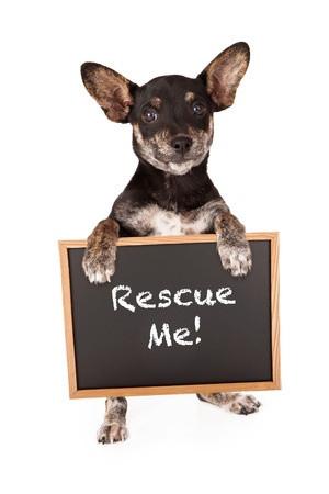 Adopting Your New Pet