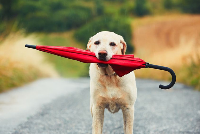 5 Ways to Keep Your Dog Active This Winter