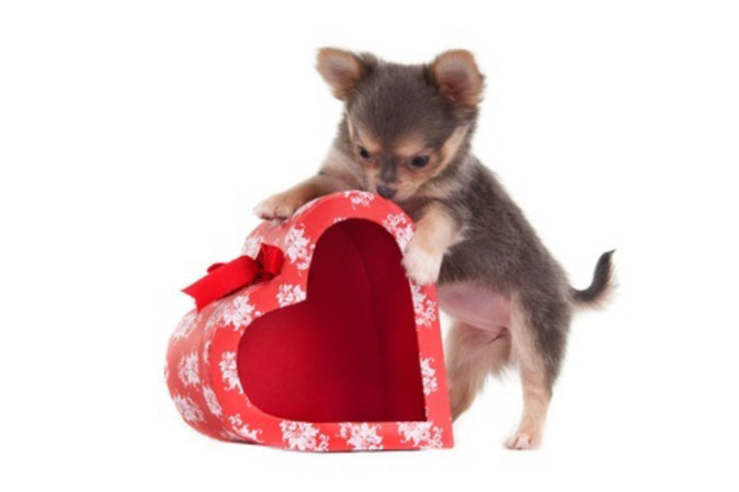 Valentine's Day Tips for Your Pets and Recipe!