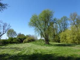 Aldreth, Cambridgeshire