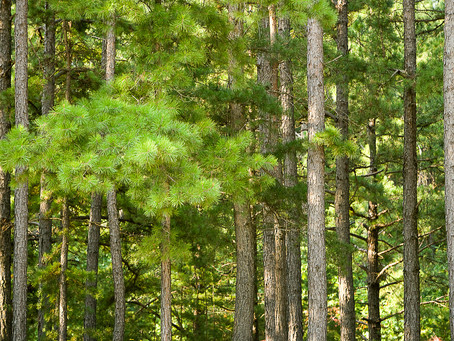 MDC offers trim grants to assist community tree care