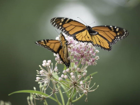 Teacher workshop to show how pollination can be used as an educational tool