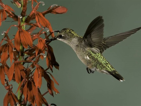 Learn how to create a bird-friendly yard at Aug. 12 MDC online program