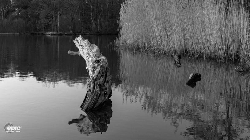 2018-03-20-Zwarte_Water_zw_Fineart-1.jpg