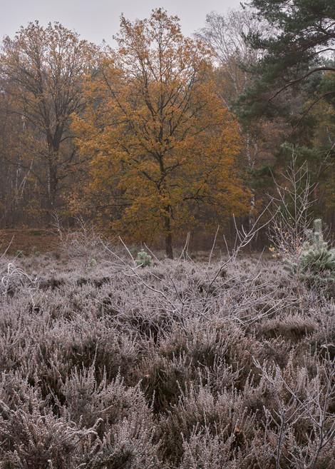 20-11-30_Joamerdal_Frosty_0.jpg