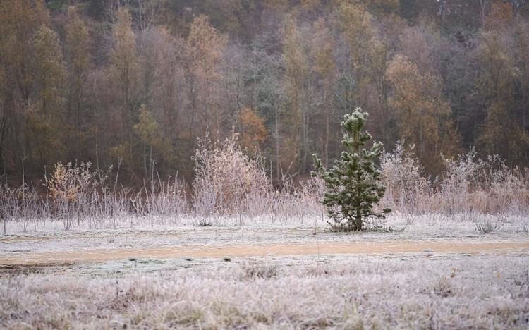 20-11-30_Joamerdal_frozen_0 7.jpg