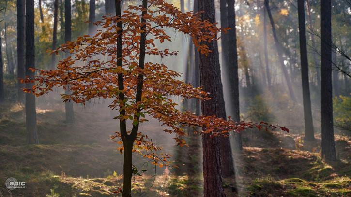 20-11-06_Hamert_Misty_Autumn0 17_LR-28.j