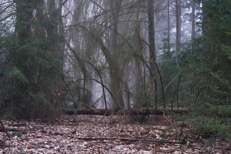 21-03-01_Meinweg_Mist_0 1.jpg