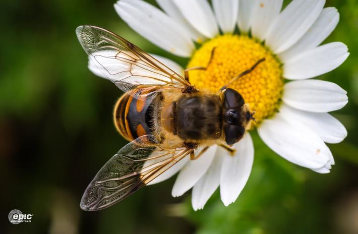 2018 Bee Happy