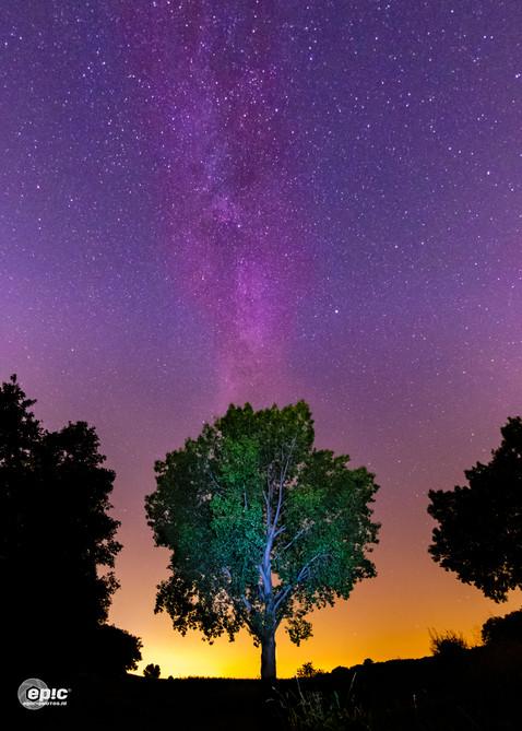 Tree & Milkyway