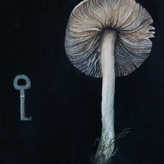 Cortinarius and a key