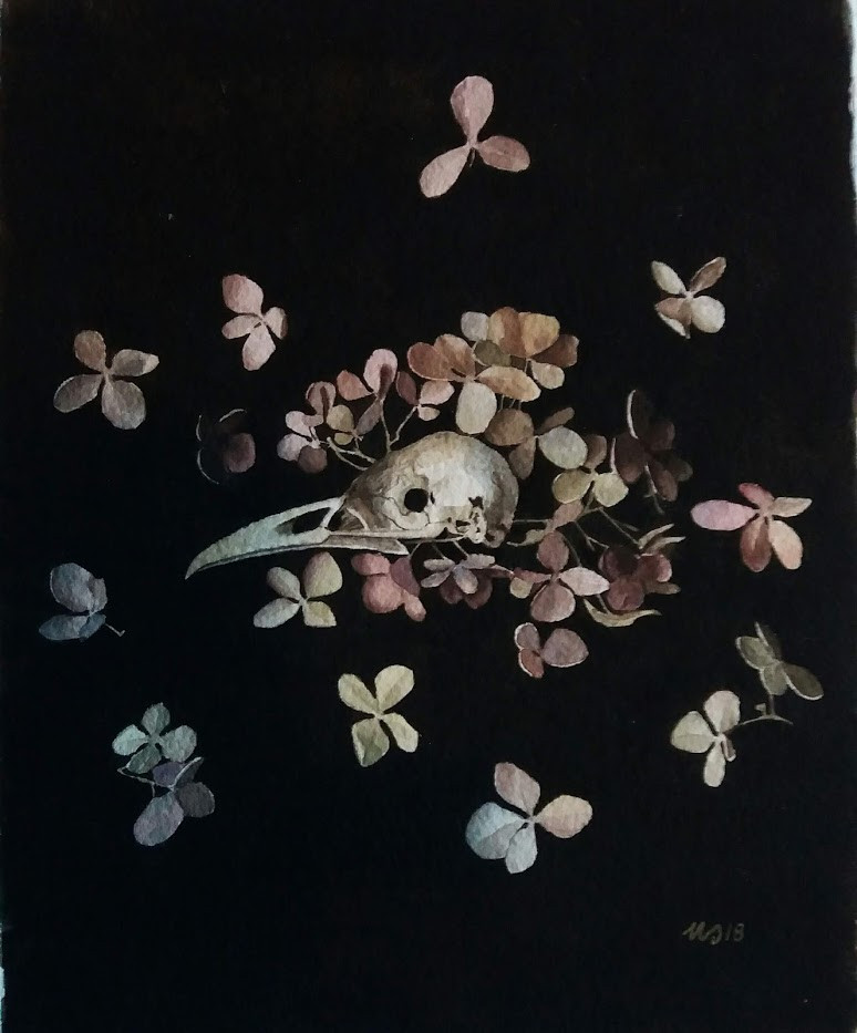 Still life with hyrangea flowers and a hooded crow scull