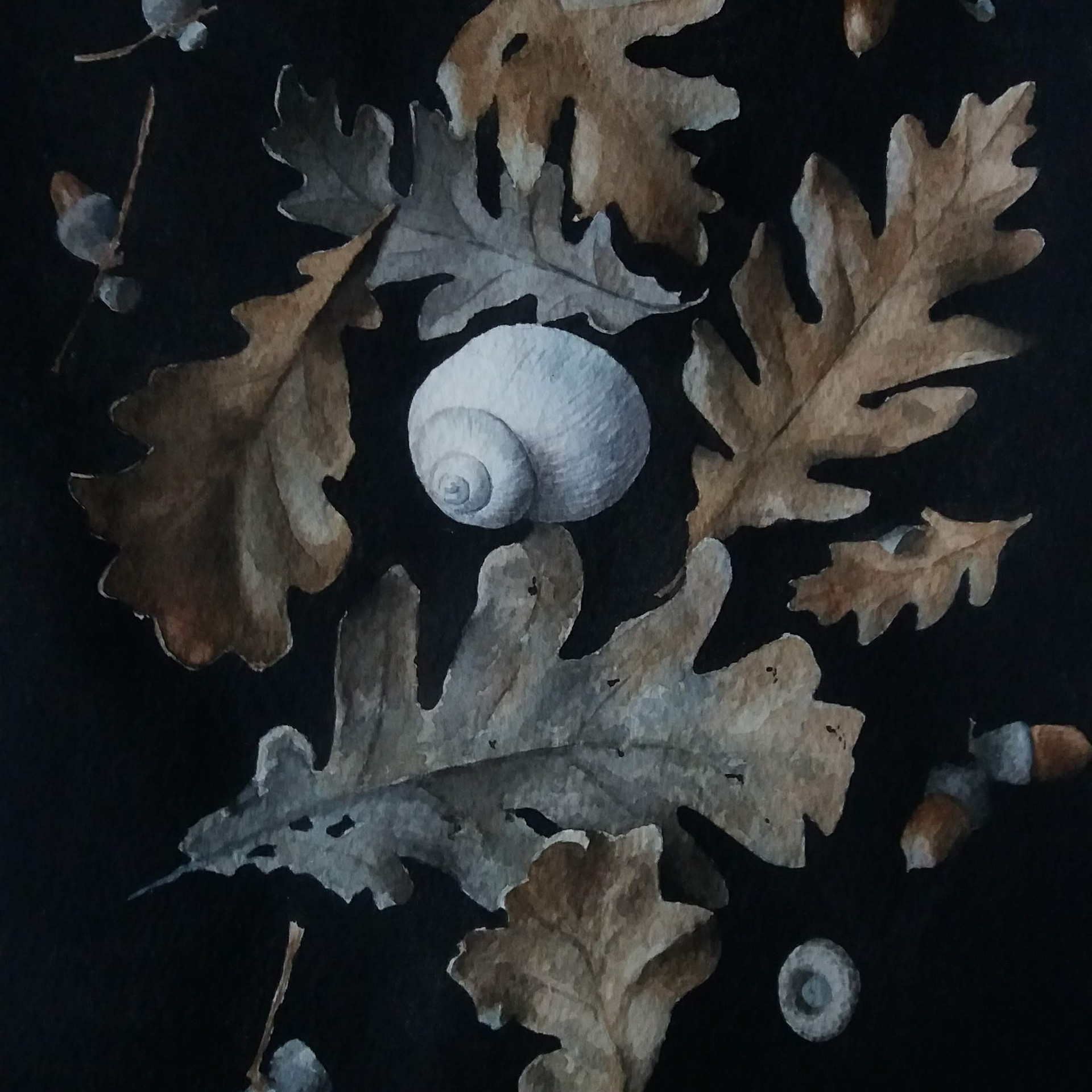 Still life with oak leafs, acorns and a shell
