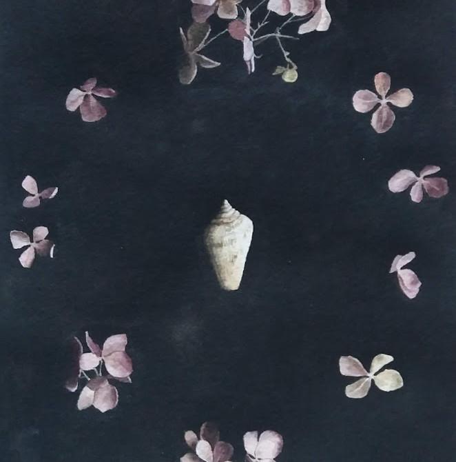 Still life with a seashell and hydrangeas