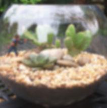 open terrarium, terrarium, cowboy, cactus, succulent