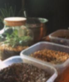 closed terrarium, terrarium, moss, plant, gravel, fittonia