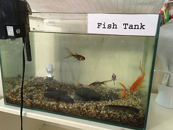 Marshwood Montessori fish are ever present for children to understand caring for animals