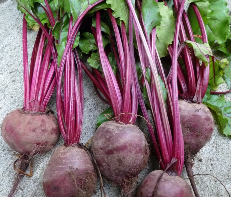 Beetroot-768x1024_edited.jpg