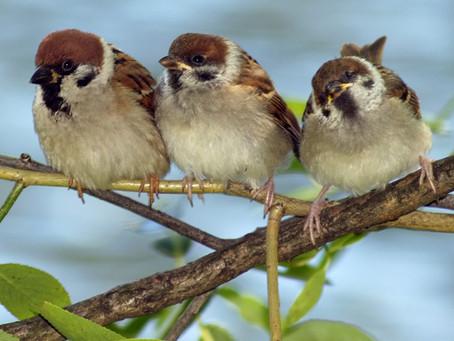 Participação e cooperação entre especialistas em nutrição, cientistas e amantes de pássaros