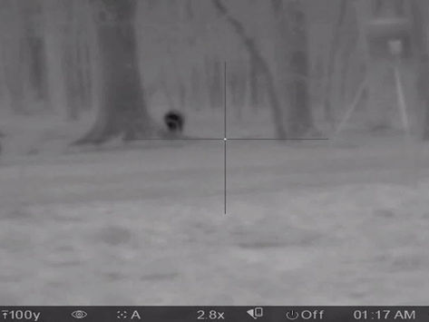 Upgrade Your Texas Hog Hunt To A Thermal Night Vision Hunt - Request When You Book...