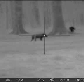 Thermal Night Scope Hog Hunting Outfitters TX Texas Boars N Bucks