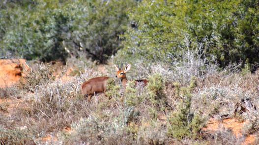 "South Africa ""The Tiny Ten"" Species Awaits You At Royal Karoo Safari Outfitters"