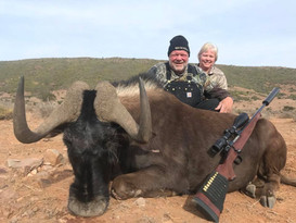Black Wildebeest Royal Karoo Safaris Eastern Cape South Africa