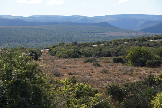 Vast Ranges At Royal Karoo To Hunt On The East Cape