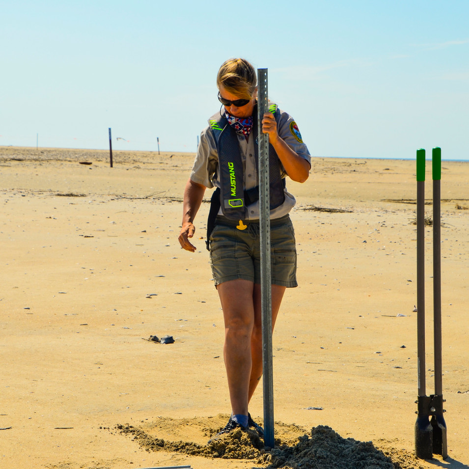 Cape Romain Bird Steward