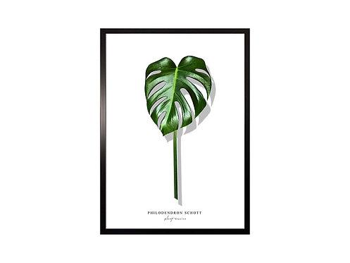 Framed Picture Leaf