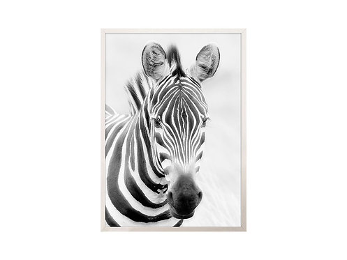 Framed Picture Zebra