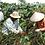 Thumbnail: Sweet Saigon