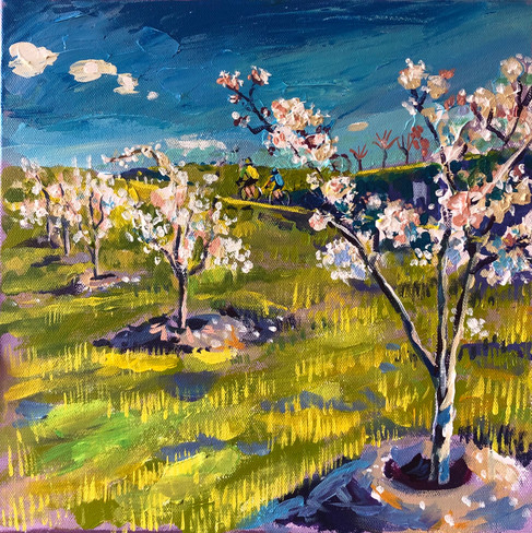 Forest 17 Yoshina Cherry, Spring time. (Prunus x yedoensis)