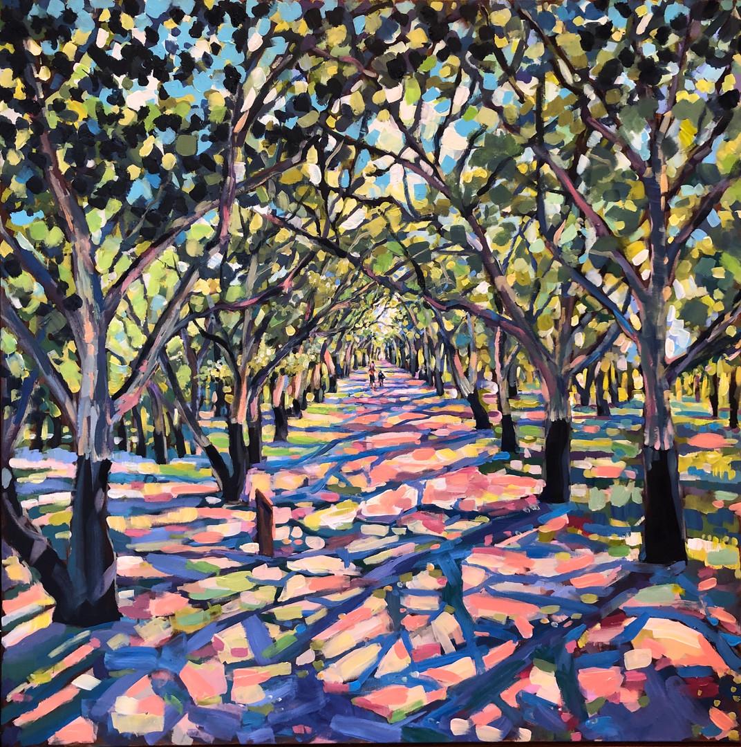 Forest 1 Cork Oak, National Arboretum Canberra