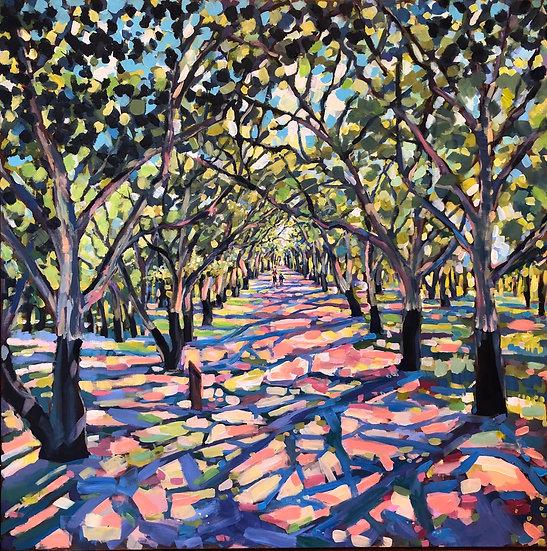 Walk in the Cork Oak Forest