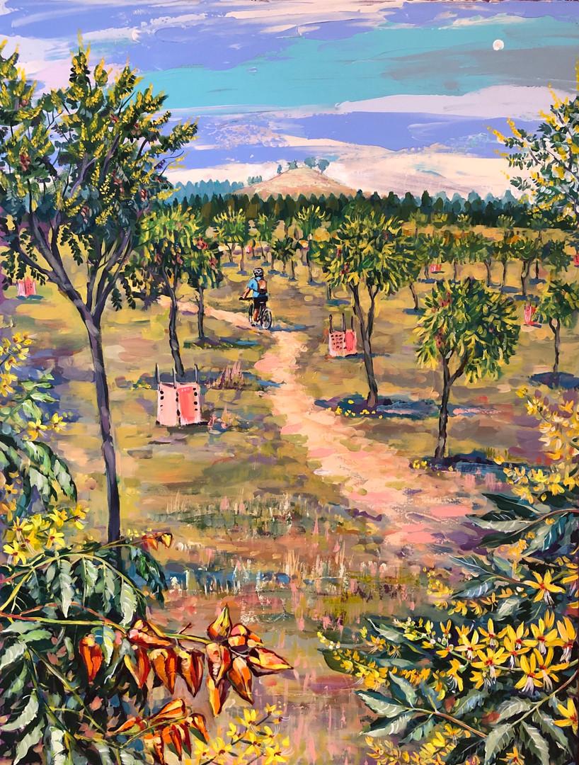 Forest 104 Golden Rain, Summer Blooms (Koelreuteria Paniculata)
