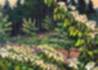 Forest8JapaneseDogwood.jpeg