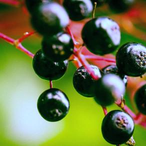 Instant Pot Elderberry-Cranberry Syrup