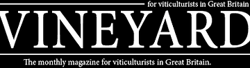 Vineyard Magazine ii.png