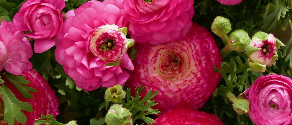 Boglárka Mix I Ranunculus Asiaticus 'Aviv Picotee'