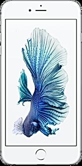 iphne 6s  display reparatur_31.03.2020