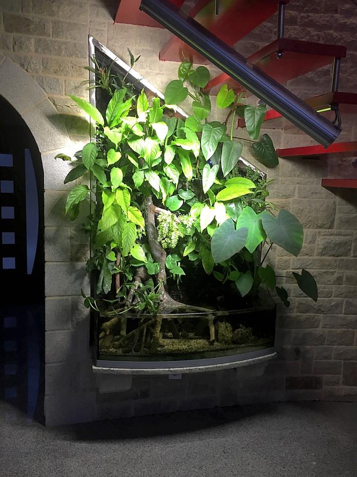 Végétal et aquarium