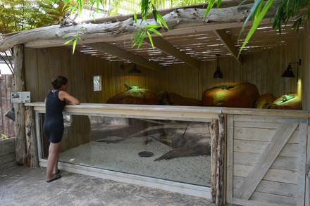 Enclos pour iguane rhinocéros