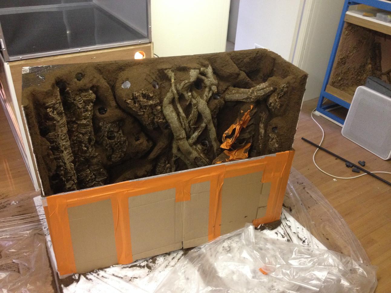 Préparation d'un aquaterrarium.