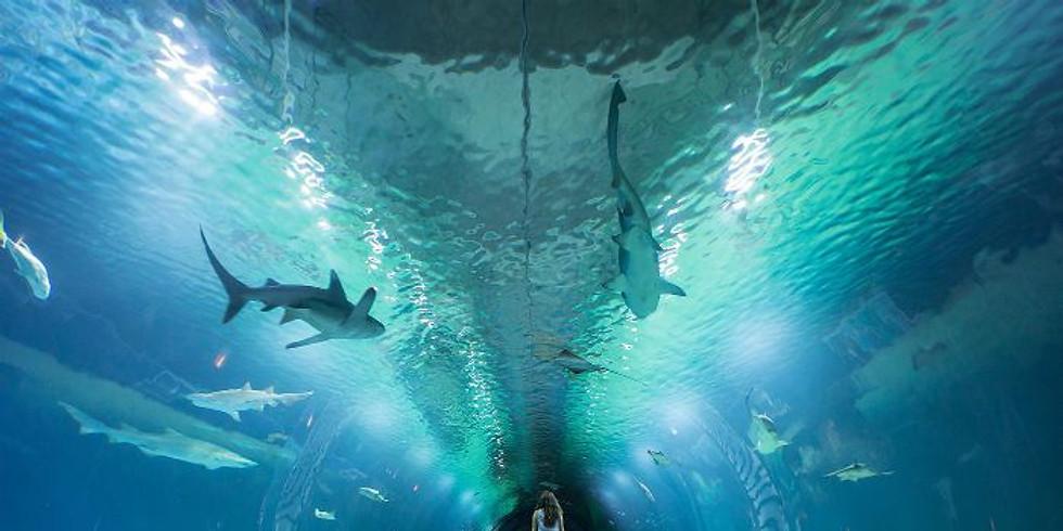 Oceanographic visit